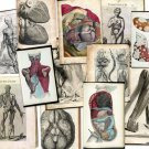 Hi Res Art DVD: Old 1500s Human BODY ANATOMY Organs Medicine Illustration Sketch