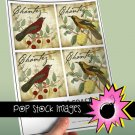 French Birds Script-3.8' square Digital Img. Coasters-Includes Img.Supply List