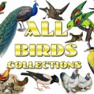 BIRDS Collections 1-169 with 26 300 vintage print