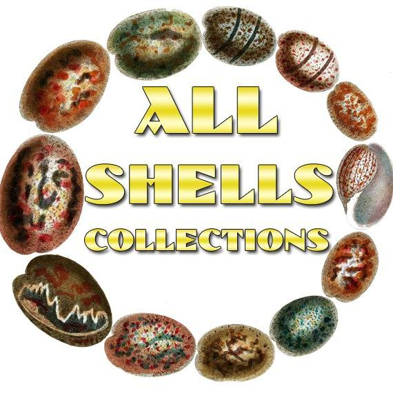 SHELLS Collections 1-54 with 10 600 vintage print
