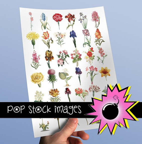 Floral Blossoms & Blooms - INDIVIDUAL Assorted vintage print