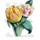 BEAUTIFUL FLOWER-007 Tulips vintage print