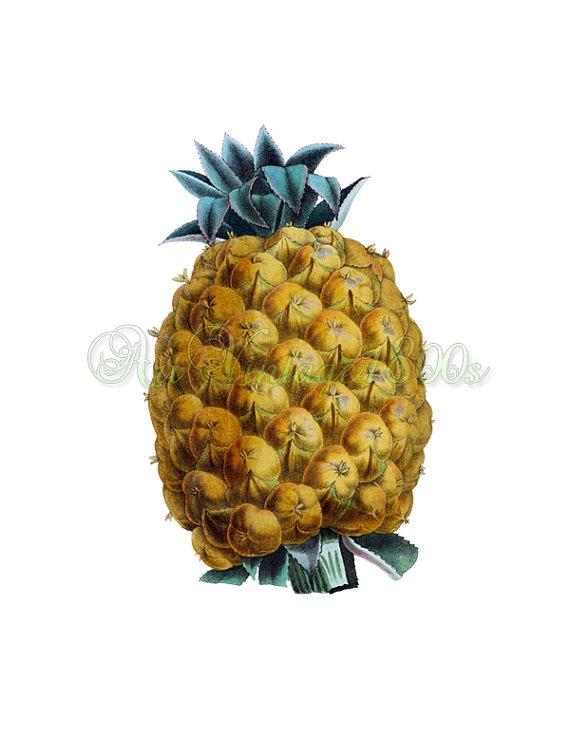JUICY FRUIT-004 Pineapple Ananas ;Otahiti vintage print