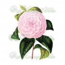 BEAUTIFUL FLOWER-009 Camellia vintage print