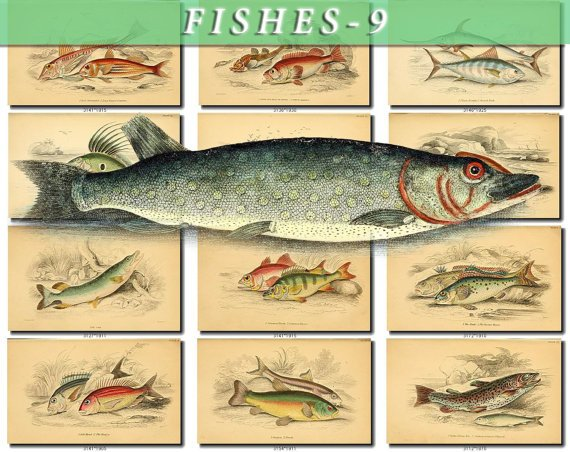 FISHES-9 157 vintage print