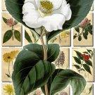 FLOWERS-13 269 vintage print