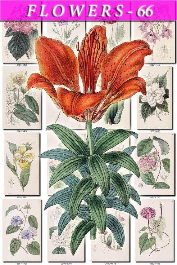 FLOWERS-66 208 vintage print