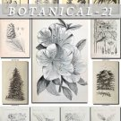 BOTANICAL-21-bw 257 black-, -white vintage print