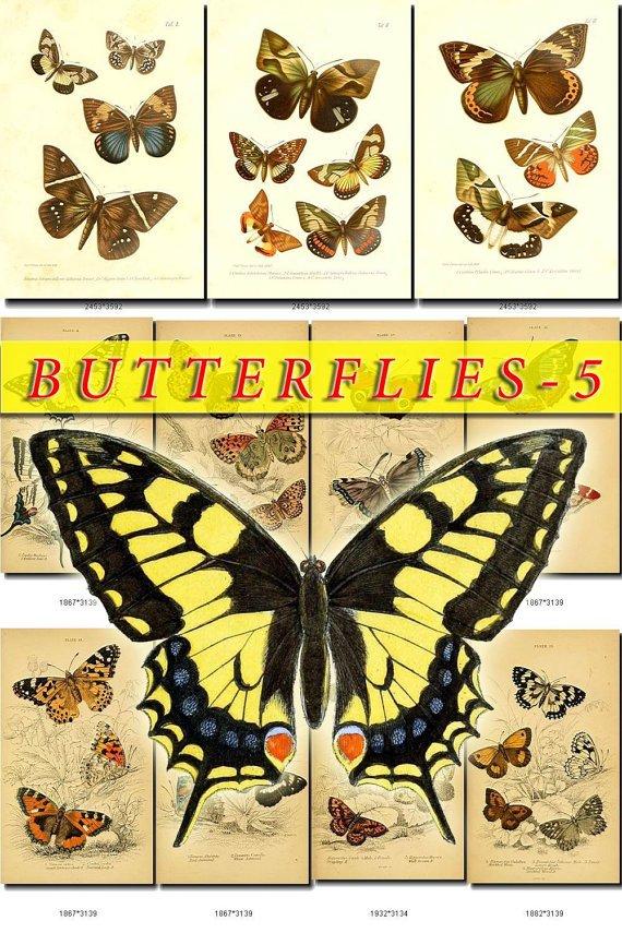 BUTTERFLIES-5 213 vintage print
