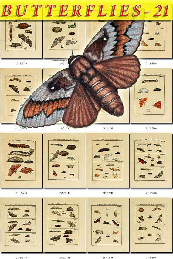 BUTTERFLIES-21 139 vintage print