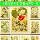 LEAVES GRASS-8 255 vintage print