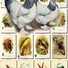 BIRDS-32 273 vintage print