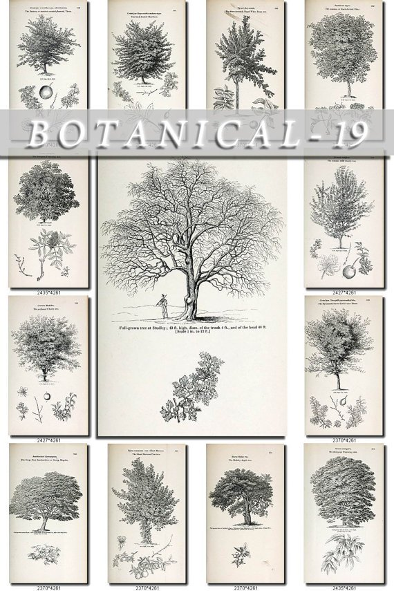 BOTANICAL-19-bw 307 black-, -white vintage print