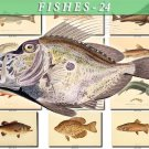 FISHES-24 69 vintage print