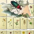 FLORA ,  FAUNA-11 206 vintage print
