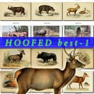 HOOFED BEST-1 UNGULATES Img. 95 most beautiful Artiodactyl Perissodactyl