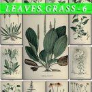 LEAVES GRASS-6 176 vintage print
