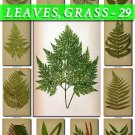 LEAVES GRASS-29 214 vintage print
