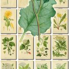 LEAVES GRASS-65 269 vintage print