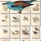 BIRDS-92 209 vintage print