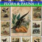 FLORA ,  FAUNA-1 210 vintage print