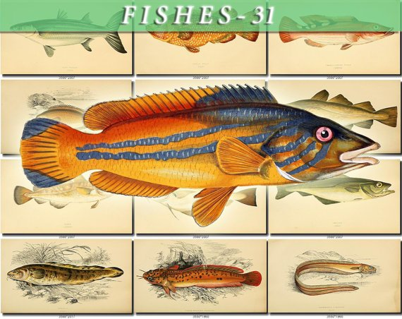 FISHES-31 127 vintage print