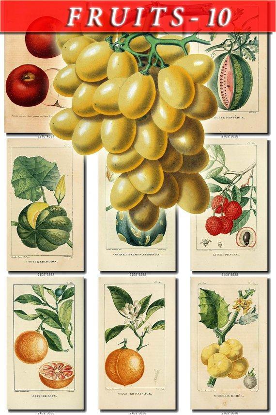 FRUITS VEGETABLES-10 52 vintage print