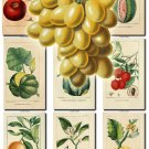 FRUITS VEGETABLES-10 52 vintage print