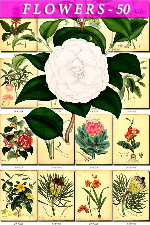 FLOWERS-50 144 vintage print