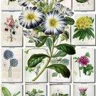 FLOWERS-92 250 vintage print
