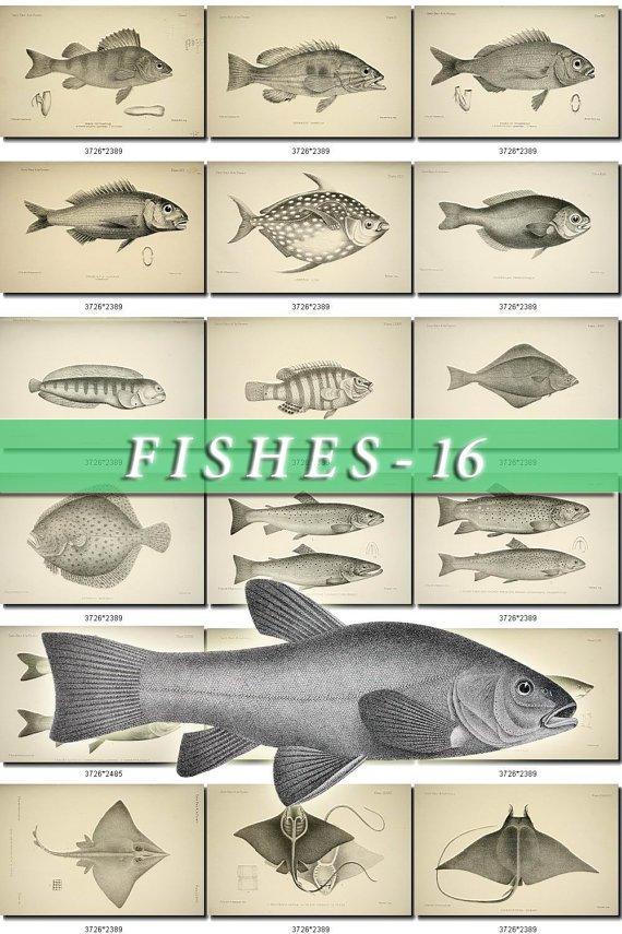 FISHES-16-bw 259 black-, -white vintage print