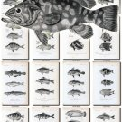 FISHES-40-bw 186 vintage print
