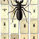INSECTS-48 160 vintage print