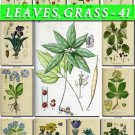 LEAVES GRASS-41 191 vintage print