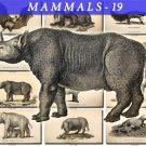 MAMMALS-19-bw 89 black-, -white vintage print
