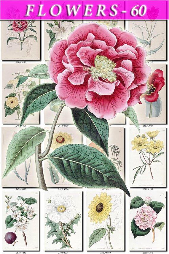 FLOWERS-60 263 vintage print