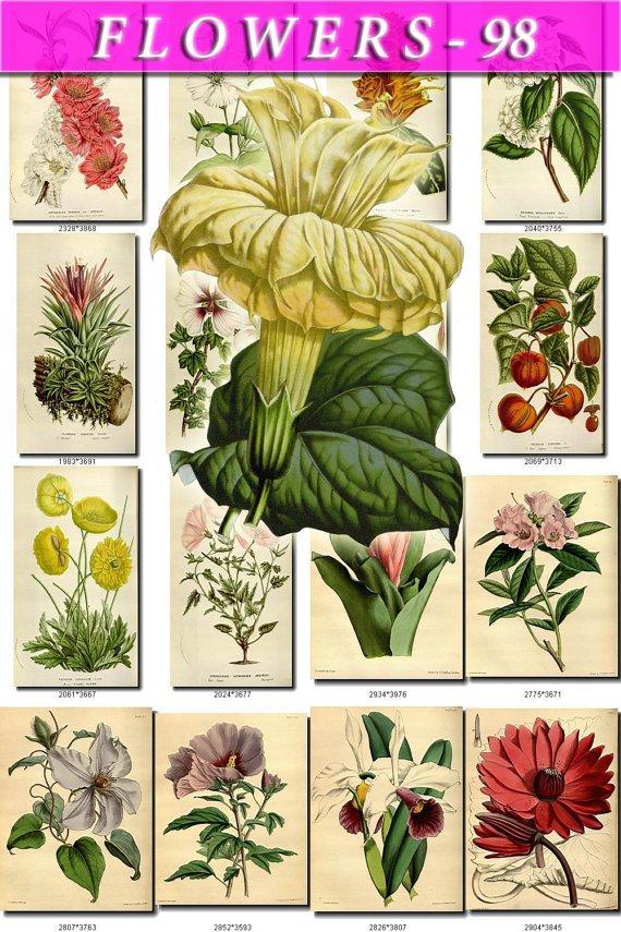 FLOWERS-98 275 vintage print