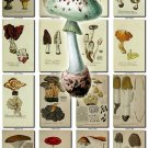 MUSHROOMS-12 292 vintage print