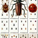 INSECTS-45 102 vintage print