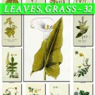 LEAVES GRASS-32 210 vintage print