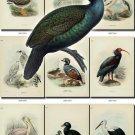 BIRDS-61 91 vintage print