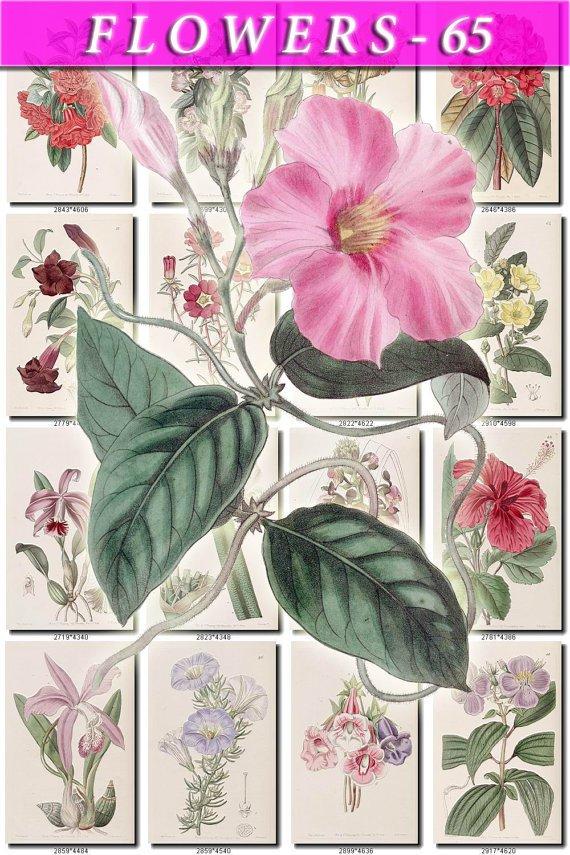 FLOWERS-65 202 vintage print