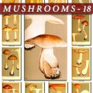 MUSHROOMS-18 162 vintage print