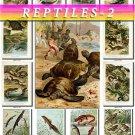 REPTILES & AMPHIBIAS-2 167 vintage print
