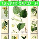 LEAVES GRASS-34 226 vintage print