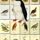 BIRDS-30 208 vintage print