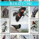 BIRDS-142 56 vintage print