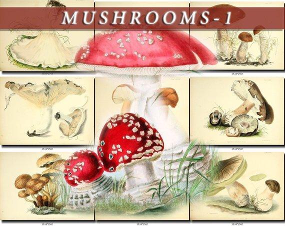 MUSHROOMS-1 278 vintage print