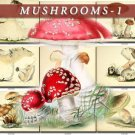 MUSHROOMS-1 278 vintage print