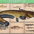FISHES-26 73 vintage print